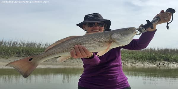 Red Fish Nearshore Picture